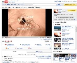 おしゃれ泥棒 「四つ葉のクローバー」.jpg